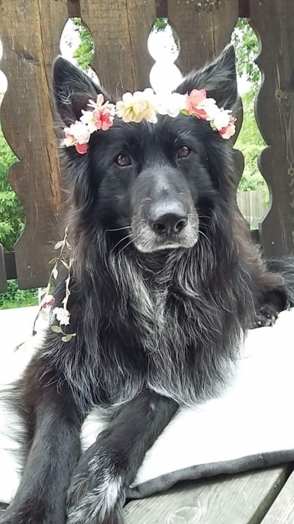 Hunden Sati
