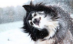 Toppbild på vinterhund
