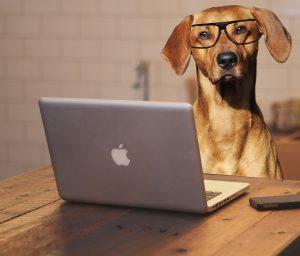 Hund med dator