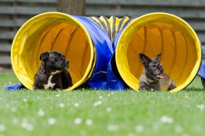 two-dogs-in-the-tunnel