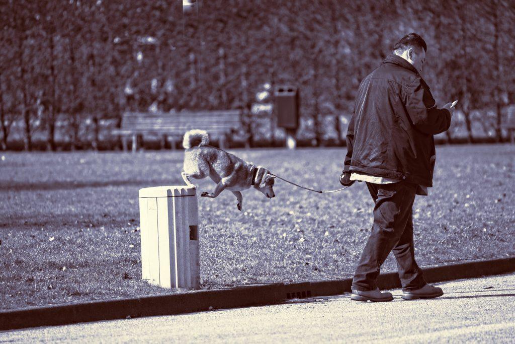 Hund på papperskorg