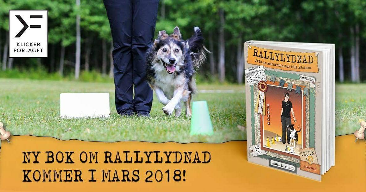 RALLYLYDNAD: Från grundfärdigheter till mästare!